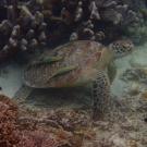 żółwie są wszędzie